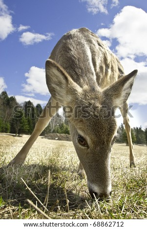 Baby deer eating grass - stock photo