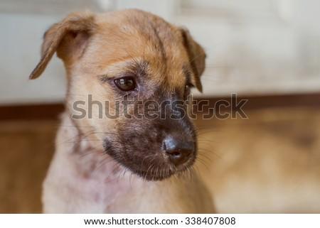 Baby dog looking - stock photo