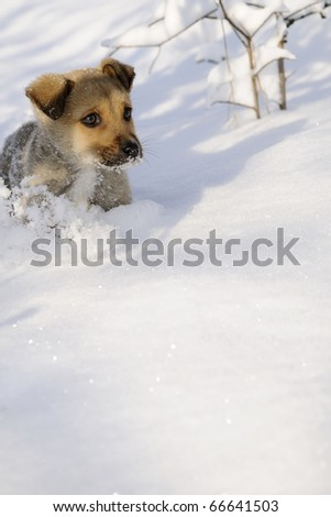 baby dog playing with snow