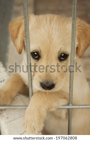 Baby dog waiting in the cage - stock photo