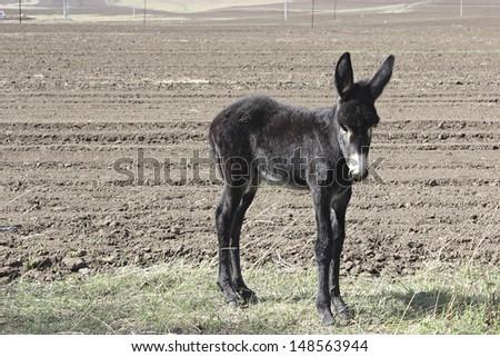 Baby Donkey - stock photo