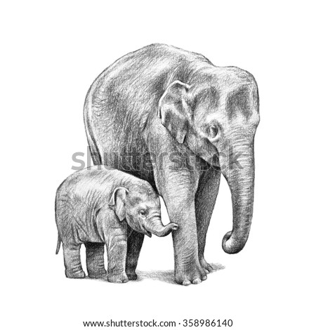 baby elephant and Asian elephant. hand drawn elephants sketch isolated on white background, Asian elephants with big ears, trunk and wrinkled skin illustration. Zoo animals.