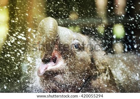 Baby elephant enjoy water - stock photo