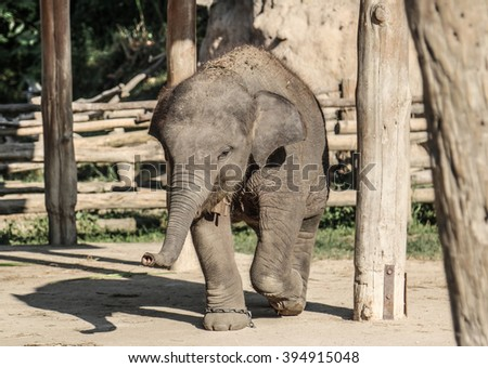 baby elephant nature trunk young cute face  - stock photo