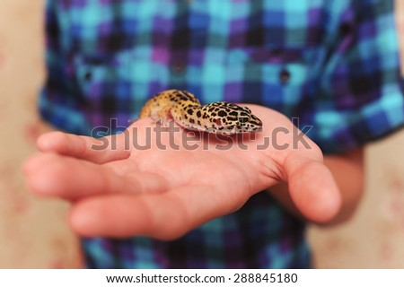Baby eublepharis sitting on boys hand closeup. Kid holding gecko. Pets. - stock photo