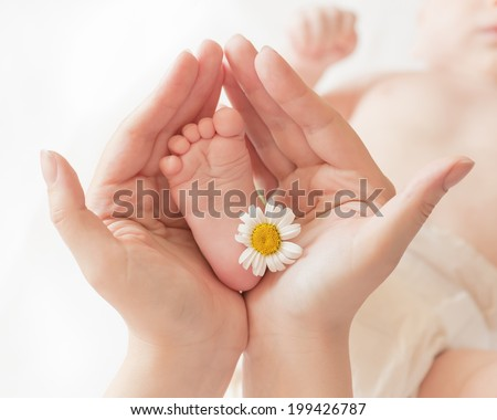 Baby foot ��?��?���µ��? camomile in mommy's hands, shallow DOF.