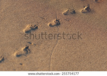 baby footprints in the sand