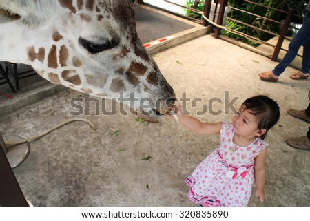 Baby girl feeding giraffes - stock photo