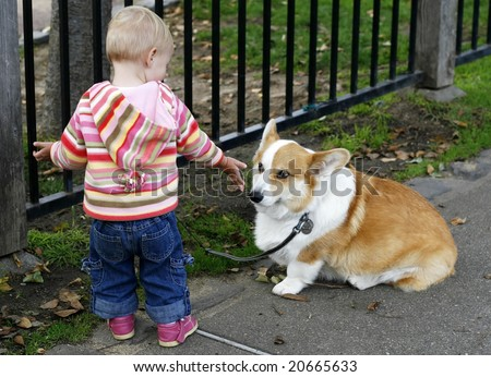 baby girl holding out hand to corgi dog - stock photo