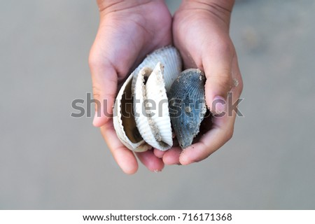 Baby hand holding the sea shell