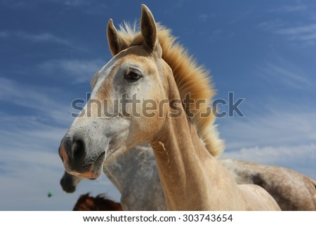 Baby horse on blue sky background
