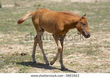 Baby Horses - stock photo