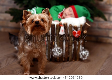Baby in elf costume lays in a basket, which is decorated with Christmas toys under the Christmas tree. Yorkshire terrier sitting there.