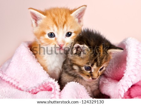 Baby kittens wrapped in a pink blanket with a pink background - stock photo