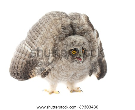 Baby Little Owl - stock photo