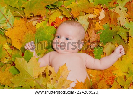 baby lying in maple leaves at autumn. Close up portrait. - stock photo