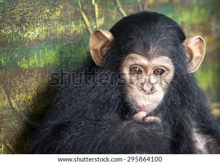 Baby monkeys cute - stock photo