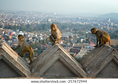 Baby monkeys with aerial view - stock photo