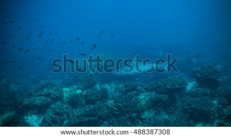 Baby of reef shark flowing in coral bottom