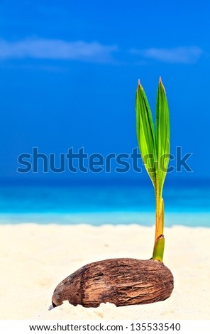 Baby palm tree is on the sandy beach - stock photo