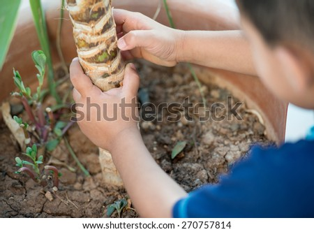 Baby planting tree - stock photo