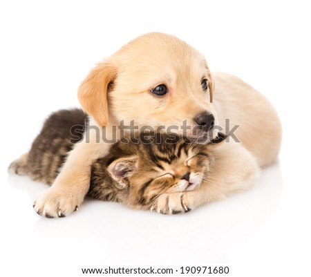 baby puppy dog and little kitten together. isolated on white background - stock photo