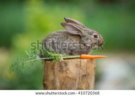 Baby rabbit bunny on stud whith carrot agaist green bokeh background - stock photo