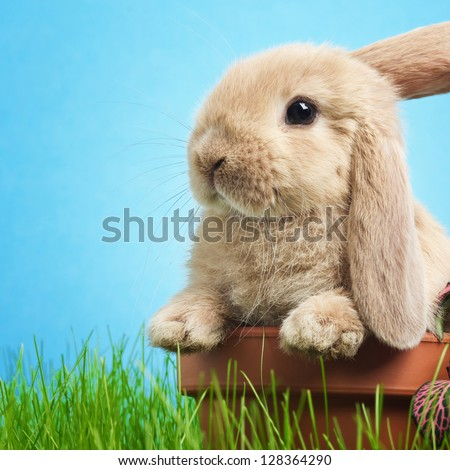 Baby rabbit in grass - stock photo