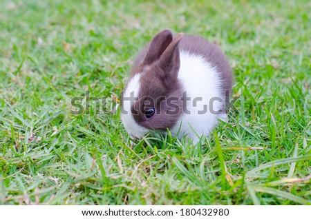 Baby rabbit in green grass - stock photo