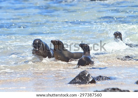 Baby Sea Lion with mother in the wild - stock photo