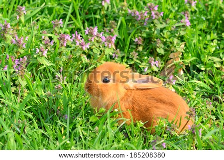 Baby shy bunny sitting in spring grass on the meadow