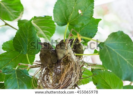 baby sparrow birds on tree - stock photo