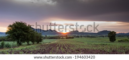 Baby sugarcane farmland at sunset time,  - stock photo