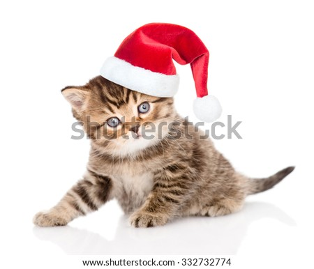 Baby tabby kitten in christmas hat looking at camera. isolated on white background.