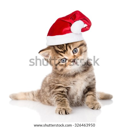 baby  tabby kitten in red christmas hat. isolated on white background - stock photo