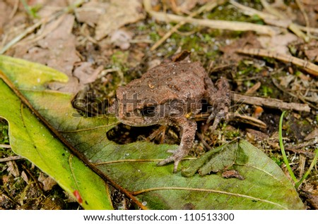 baby toad on forest floor from above
