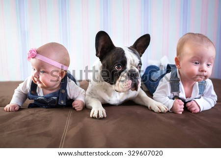 Baby twins and french bulldog on the couch - stock photo