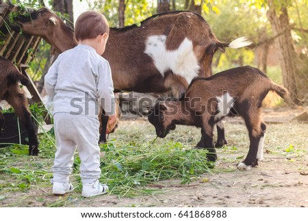 Baby watching mother and baby goat eating