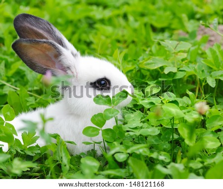 Baby white rabbit in grass - stock photo