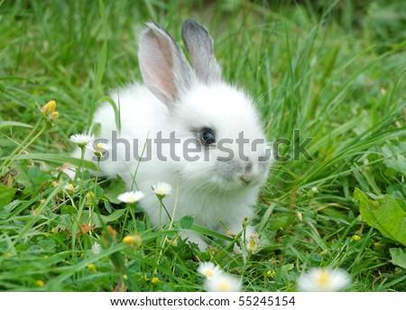 Baby white rabbit in grass - stock photo