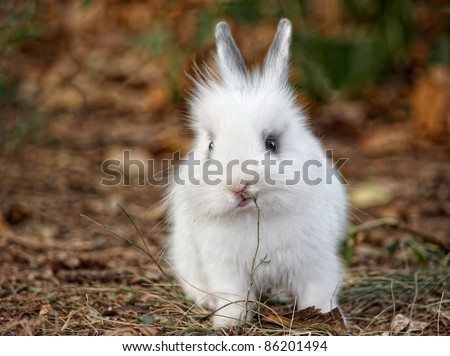 Baby white rabbit in grass, Cute Rabbit - stock photo