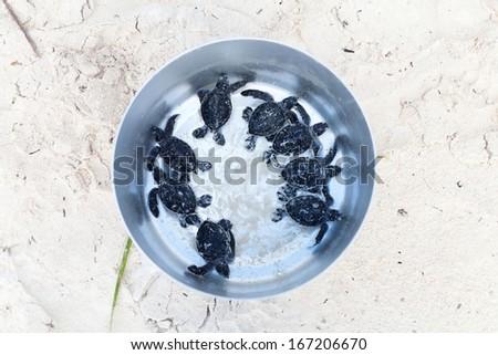 Babys Turtle - stock photo