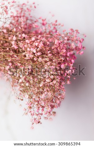 babysbreath in front of white wall studio shot - stock photo