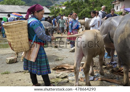 Bac Ha, Vietnam - August 14, 2016: Vietnamese woman examines a calf in outdoor market. North Vietnam hosts several minorities, each of them usually recognizable by its traditional clothing.