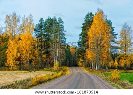 Back country road with bright colored leaves.