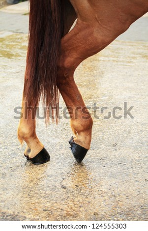 back legs of a horse