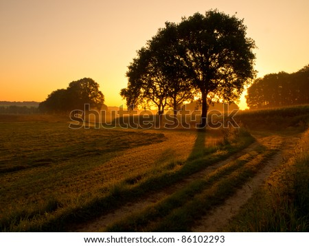 back lit trees along a track during sunrise - stock photo