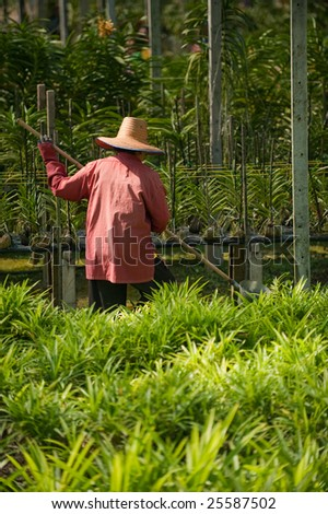 Back of a women working in an orchid farm in Bangkok, Thailand - stock photo