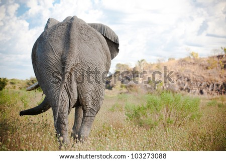 Back of elephant - stock photo
