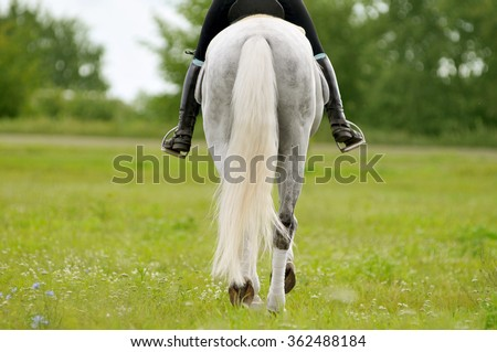 back of horse and rider detail outdoors - stock photo